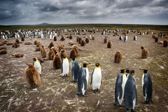 Penguin Colony Stock Photos