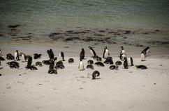 PENGUIN COLONY ON THE BEACH Stock Photo