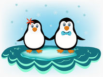 Penguin couple Stock Photography