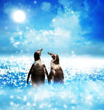 Penguin couple in night fantasy landscape Stock Photos