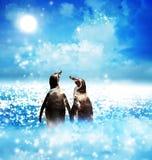 Penguin couple in night fantasy landscape Stock Photos