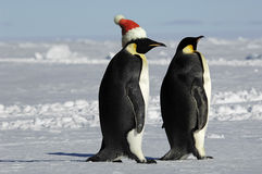 Penguin couple on Xmas. Antarctic penguin couple on Xmas Royalty Free Stock Photos