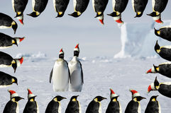 Penguin couple xmas card. Antarctic penguin pair christmas card Royalty Free Stock Images