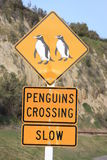 Penguin crossing Royalty Free Stock Photos
