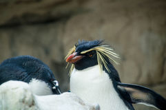 Penguin. A detail of a penguin posing in the zoo Stock Images