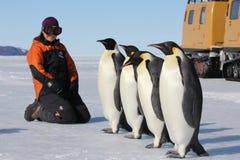 Penguin encounter in Antarctica Stock Photo