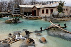 Penguin exhibit with natural habitat and educational center,Baltimore Zoo, Maryland,March,2015 Royalty Free Stock Photos