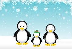 Penguin Family Stock Images