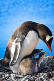 Penguin Family. Penguin Mother and her two Children in Antarctica stock photography