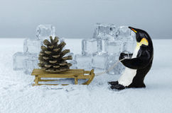 Penguin and fir cone Royalty Free Stock Photos