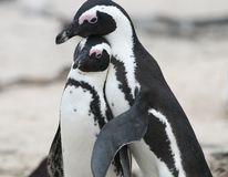 Penguin Fit stock image