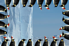 Penguin frame Christmas card Royalty Free Stock Images