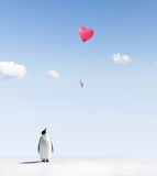 Penguin getting love letter Royalty Free Stock Photo