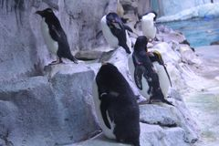 Penguin Group royalty free stock photos
