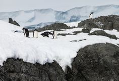 Penguin group on the snow Stock Image