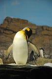 Penguin habitat Stock Image