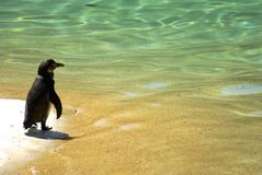 Penguin on holidays - Sand and water background Royalty Free Stock Images