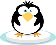 Penguin on Ice Stock Image