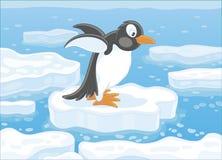 Penguin on an ice floe Royalty Free Stock Photo