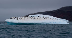 Penguin Iceberg. An Iceberg in Antarctica is filled with penguins Royalty Free Stock Images