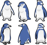 Penguin icon set. Standing Penguin Set Vector Illustration Royalty Free Stock Image