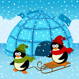 Penguin igloo Royalty Free Stock Photos