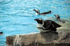 Free Penguin In Bird Park Royalty Free Stock Photo - 25644845
