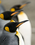 Penguin Line Up Stock Image