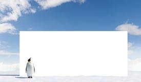 Penguin looking at billboard Royalty Free Stock Photos