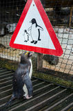 Penguin looking at Penguin sign Royalty Free Stock Image