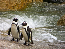 Penguin lovers Royalty Free Stock Photography