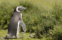 Penguin Magellan