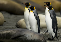 Penguin March Stock Photo