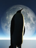 Penguin and moon Stock Images