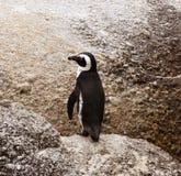 Penguin Royalty Free Stock Photo