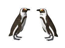 Penguin Pair Stock Image