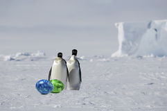 Penguin pair with easter eggs. Penguin pair with colourful easter eggs royalty free stock photo
