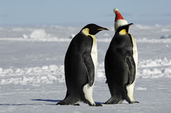 Penguin pair on Xmas Royalty Free Stock Image