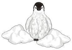 Penguin peek up from snow. White penguin baby peek up from white snow and watch Royalty Free Stock Image