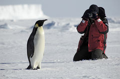 Penguin photos. Man taking emperor penguin photos