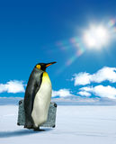 Penguin planning to travel Stock Photos