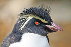 Penguin portrait Stock Photography