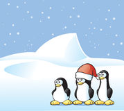 Penguin Postcard Stock Photo