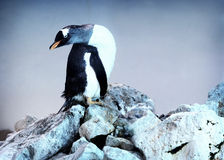 Penguin. On a rock in the zoo stock photos