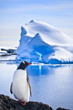 Penguin on the rocks Royalty Free Stock Photography