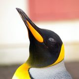 Penguin royal Royalty Free Stock Images