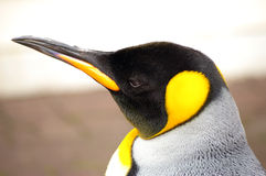 Penguin royal Royalty Free Stock Photography