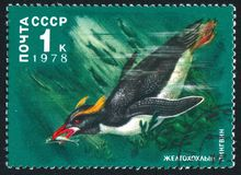 Penguin. RUSSIA - CIRCA 1978: stamp printed by Russia, shows Crested penguin, circa 1978 stock photography