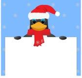 Penguin in santa hat. Peeking Royalty Free Stock Image