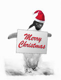 Penguin says Merry Christmas. Cute Penguin wearing red Santa hat holding ''Merry Christmas'' sign Stock Photography
